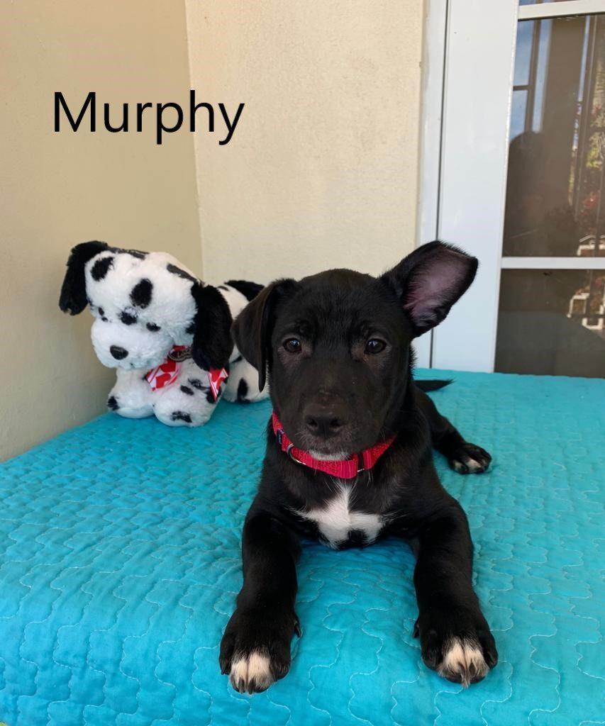 Murphy3a