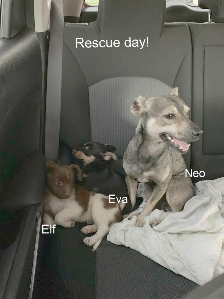 Elf Eva rescue day 1