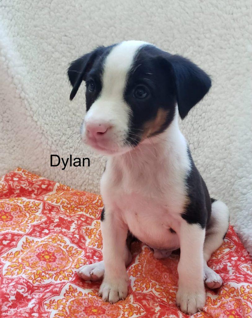 M Dylan 1a