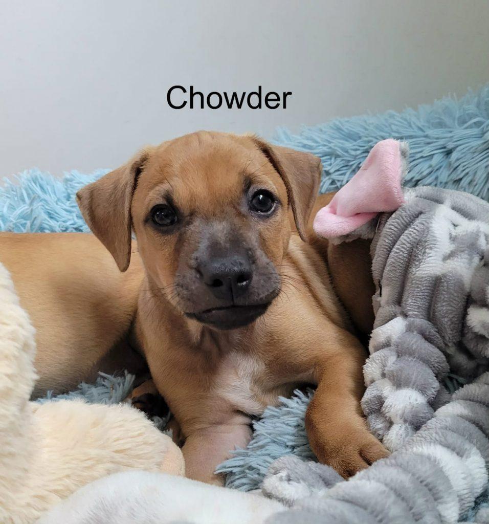 chowder1a