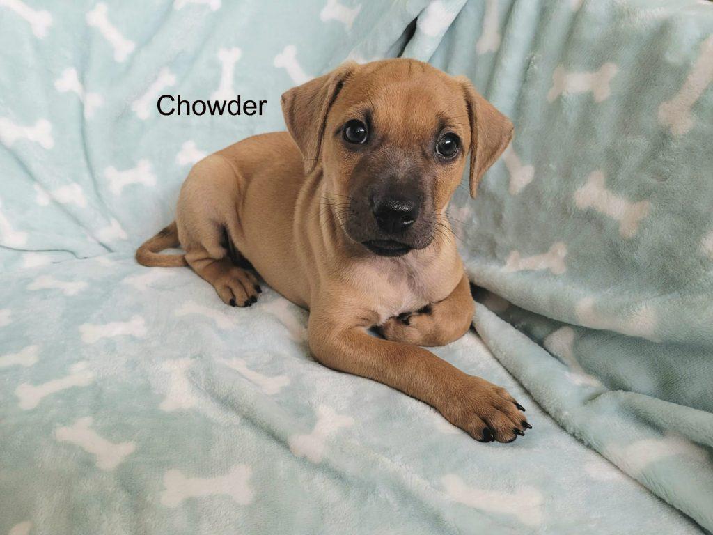 chowder5a